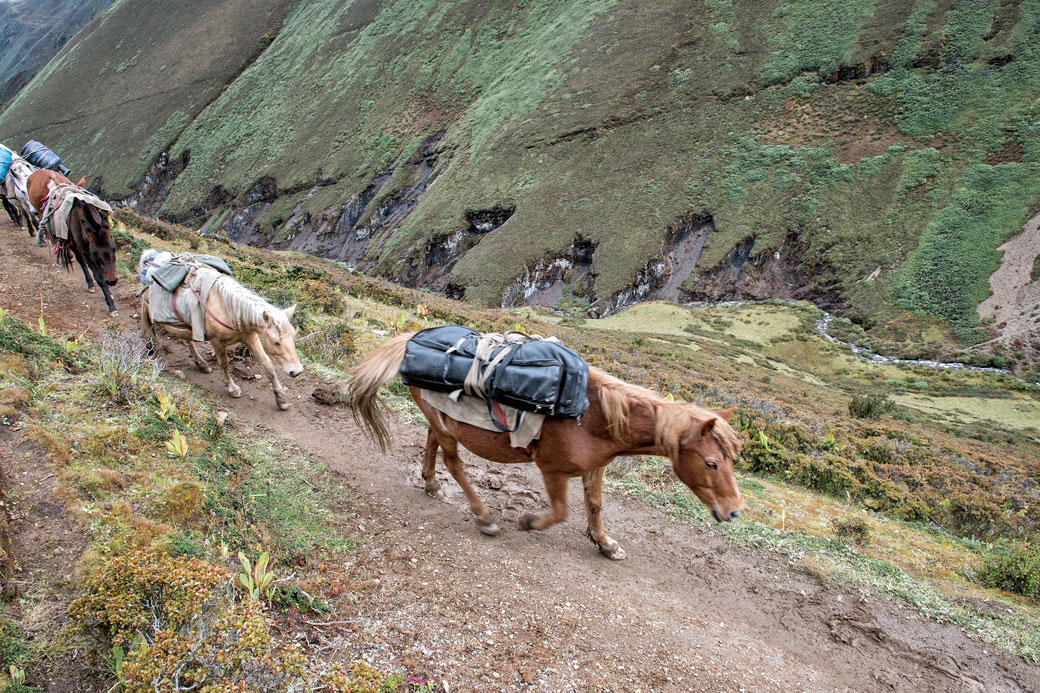 Chevaux qui remontent la vallée entre Lingshi et Nyile La, Bhoutan