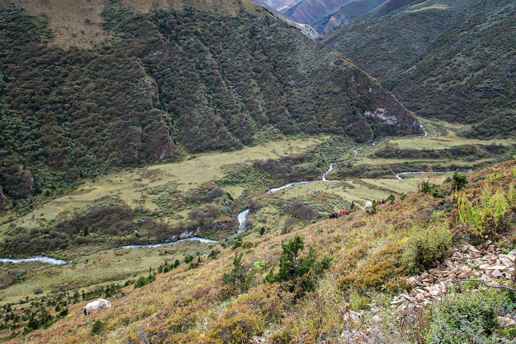 Vallée entre Lingshi et Chebisa, Bhoutan