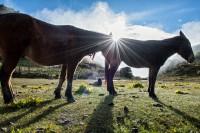 Âne et cheval à Chebisa au lever du soleil, Bhoutan
