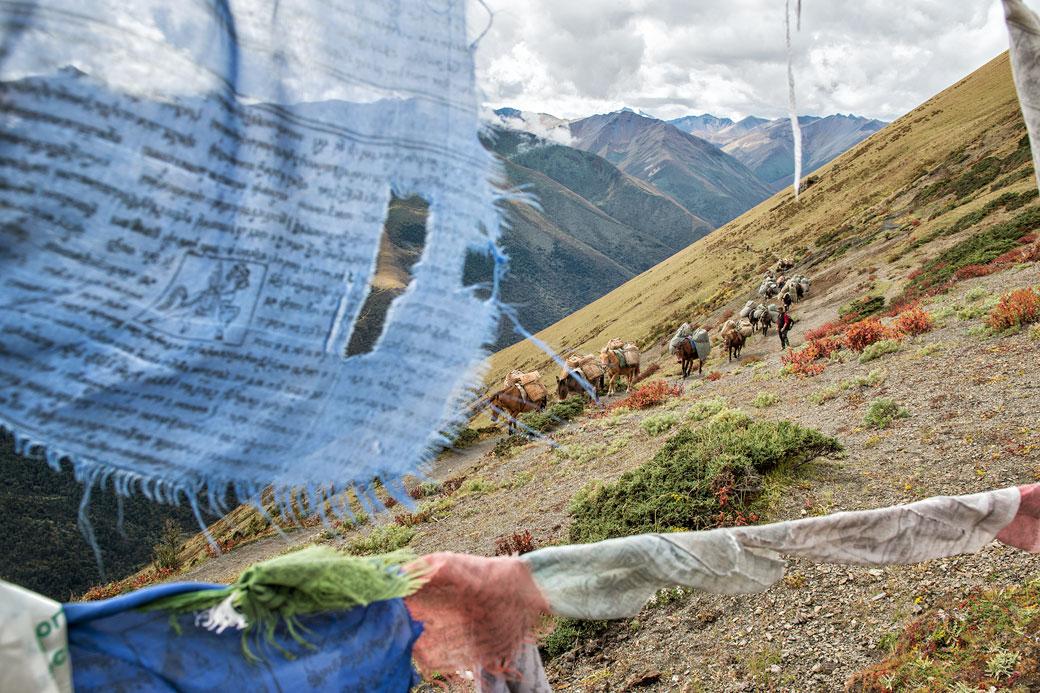 Drapeaux de prières et chevaux au col de Gombu La, Bhoutan