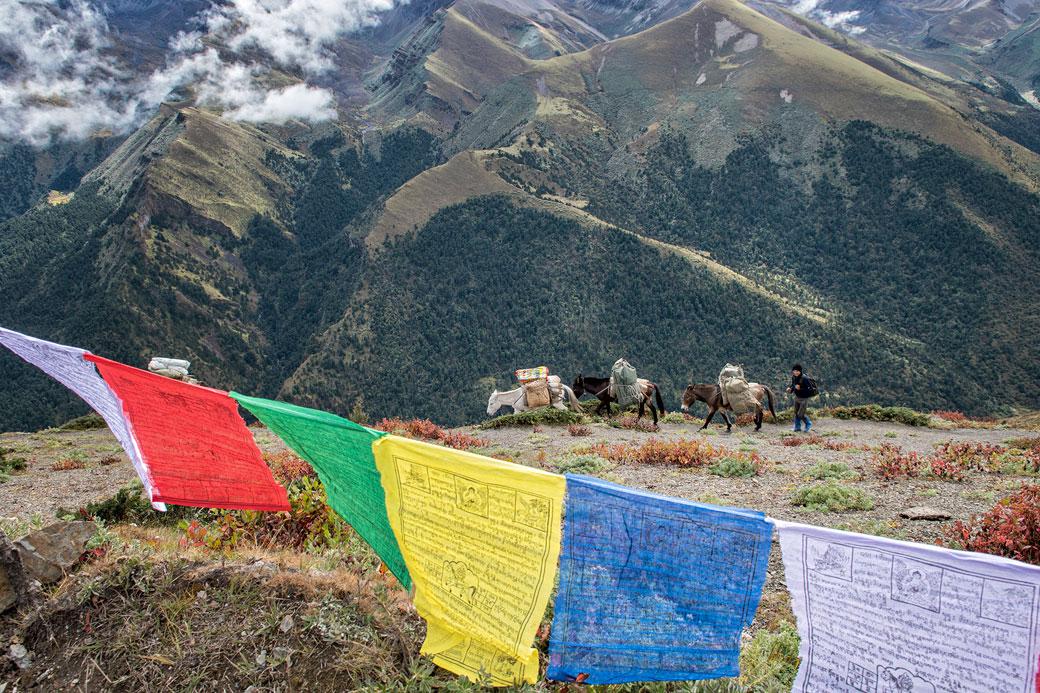 Chevaux et drapeaux de prières au col de Gombu La, Bhoutan