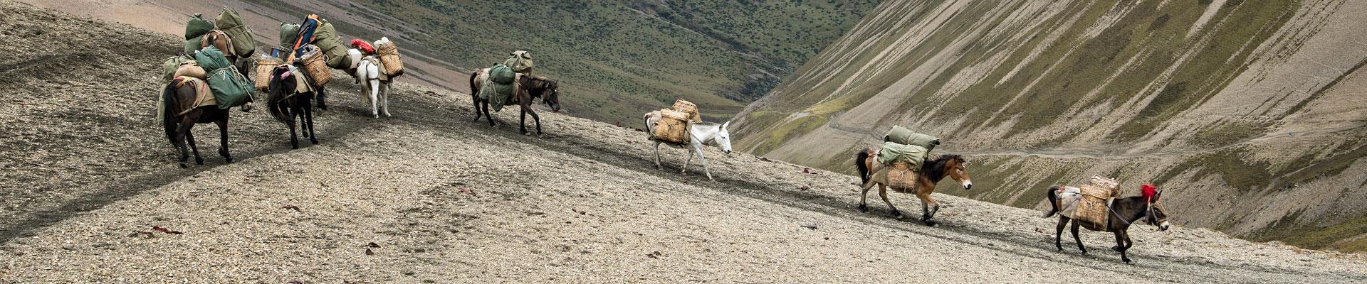 Top image chevaux au col de Nyile La, Bhoutan