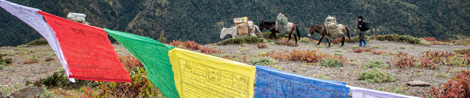 Top image chevaux au col de Gombu La, Bhoutan