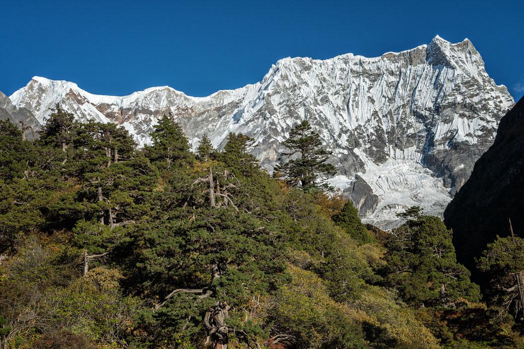 Forêt devant le Gangchhenta depuis Lemithang, Bhoutan