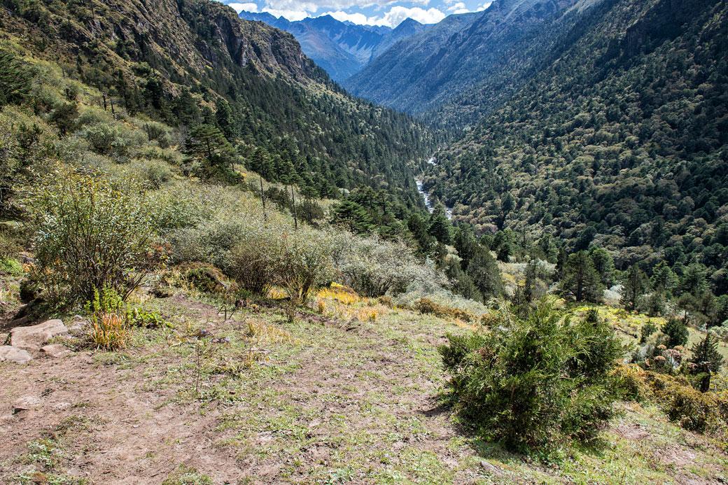 Vallée et forêt entre Lemithang et Laya, Bhoutan