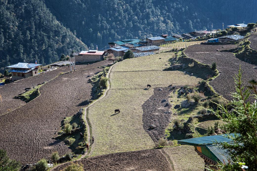 Champs et maisons dans le village de Laya, Bhoutan