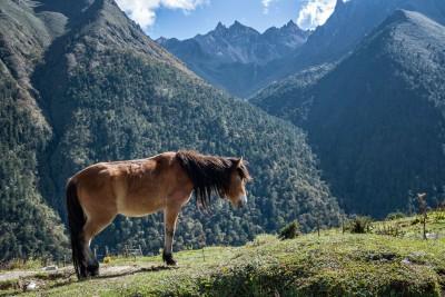 Cheval et montagnes à Laya, Bhoutan