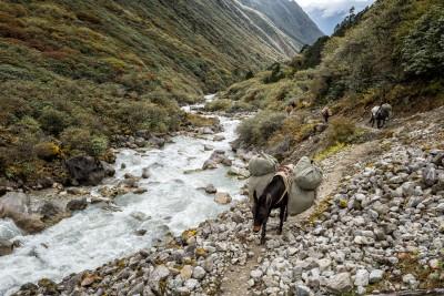 Animaux de portage en route pour Rodophu, Bhoutan