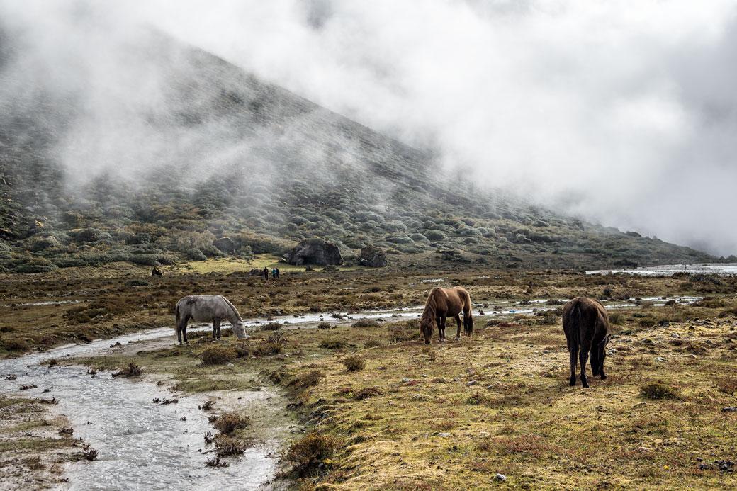 Brume et bêtes de somme à Rodophu, Bhoutan