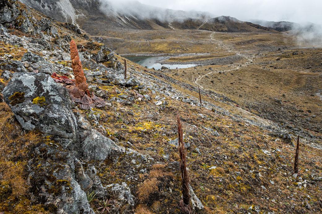 Sentier et rhubarbes nobles au col de Tsemo La, Bhoutan