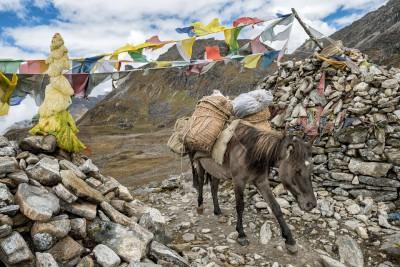 Cheval chargé au col de Tsemo La, Bhoutan
