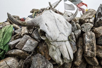 Crâne de yak au col de Tsemo La, Bhoutan