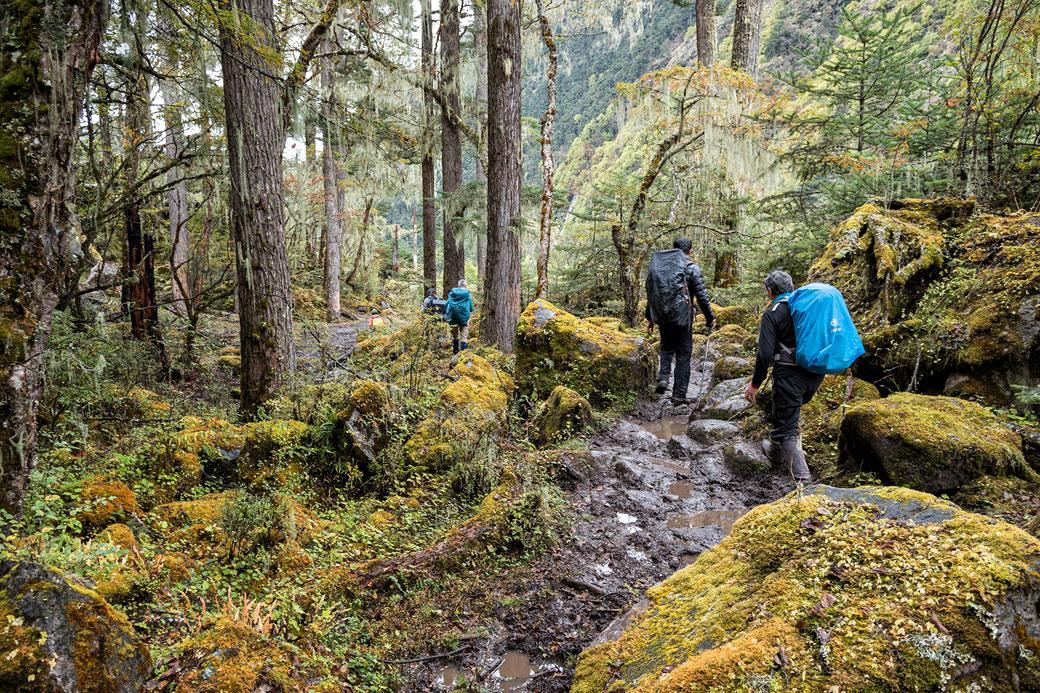 Trekkeurs dans la forêt en route pour Woche, Bhoutan