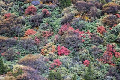 Arbustes colorés en route pour Thrika, Bhoutan