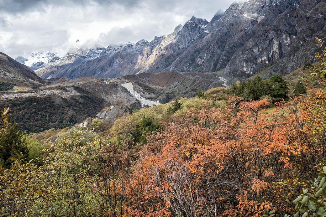 Montagnes et végétation près du camp de Thrika, Bhoutan