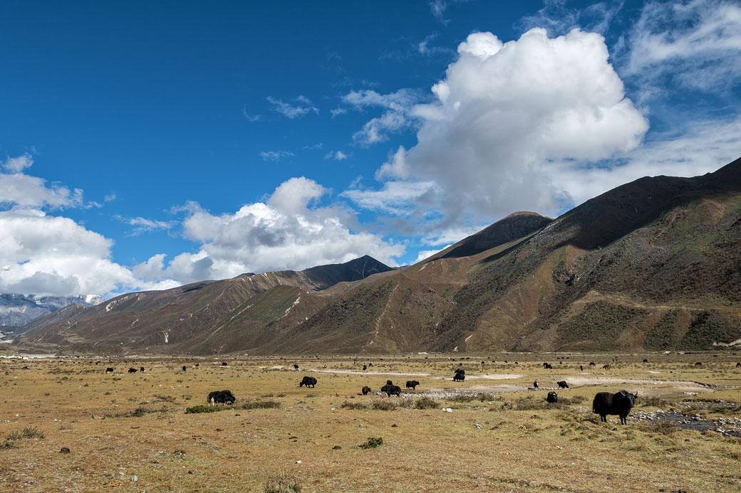 Haute vallée de Lunana à Chozo, Bhoutan