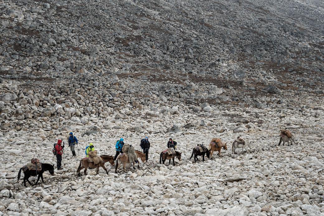 Trekkeurs et bêtes de somme en route pour Tshochena, Bhoutan