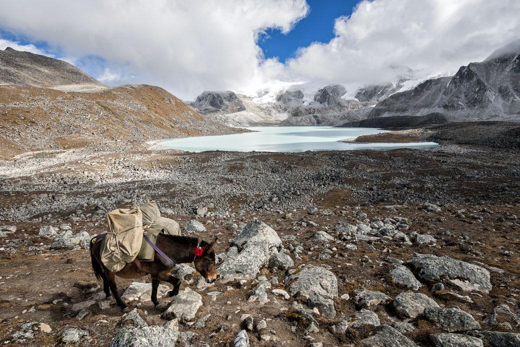 Mulet chargé près du col de Loju La, Bhoutan