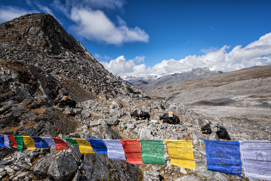 Yaks qui arrivent au col de Loju La, Bhoutan