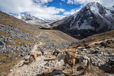 Haute vallée en route pour Jichu Dramo, Bhoutan