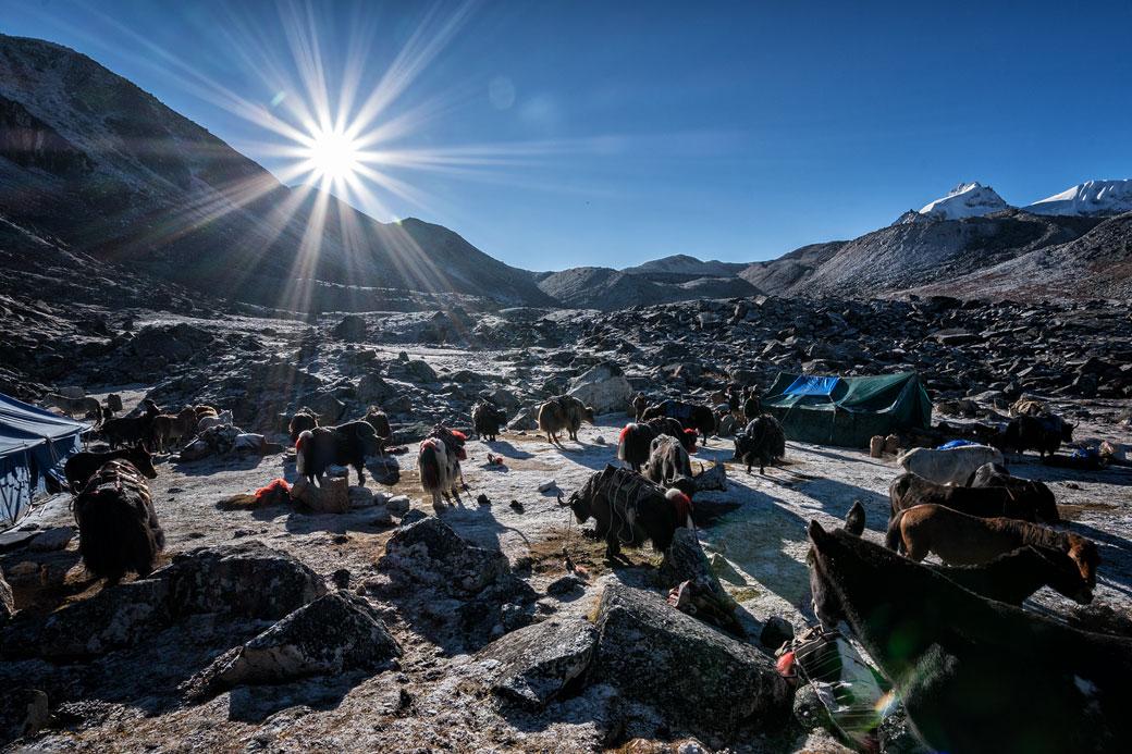 Soleil et bêtes de somme au camp de Jichu Dramo, Bhoutan