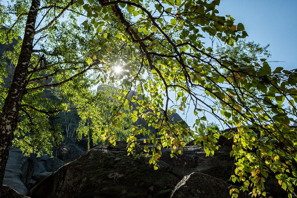 Soleil à travers le feuillage au premier pilier de Stolby, Russie