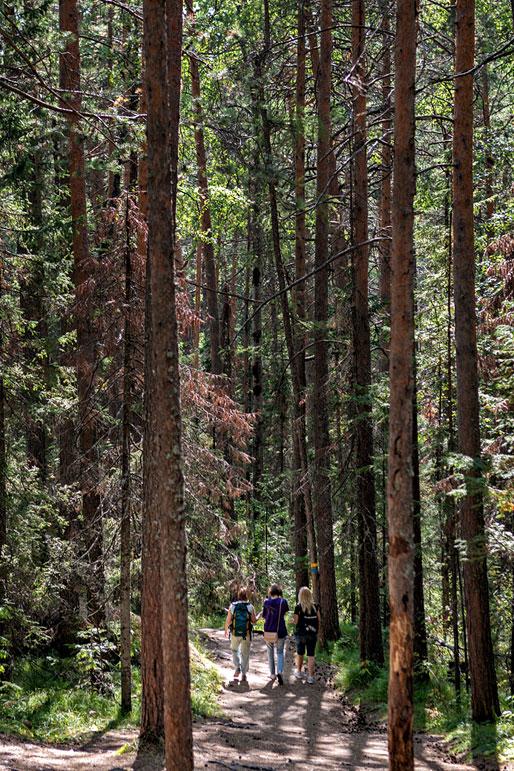 Balade dans la forêt de la réserve de Stolby, Russie