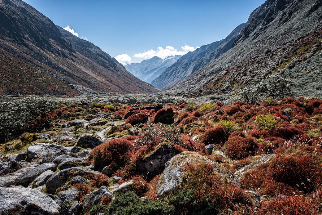 Très belle vallée colorée de Thampe Chhu, Bhoutan