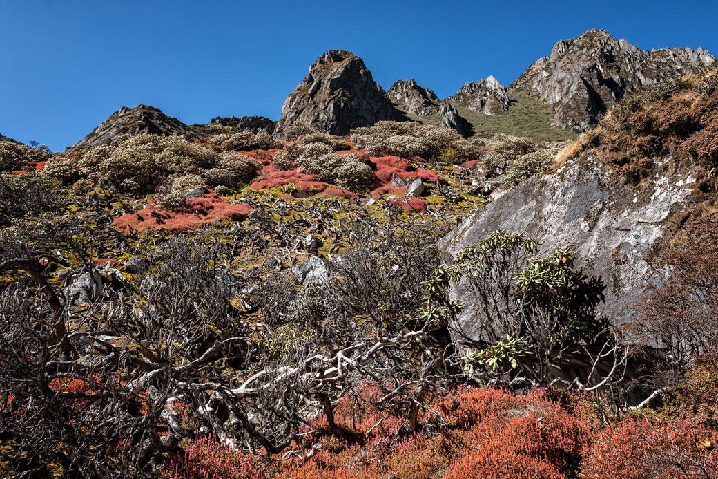 Montagnes et végétation colorée dans la vallée de Thampe Chhu