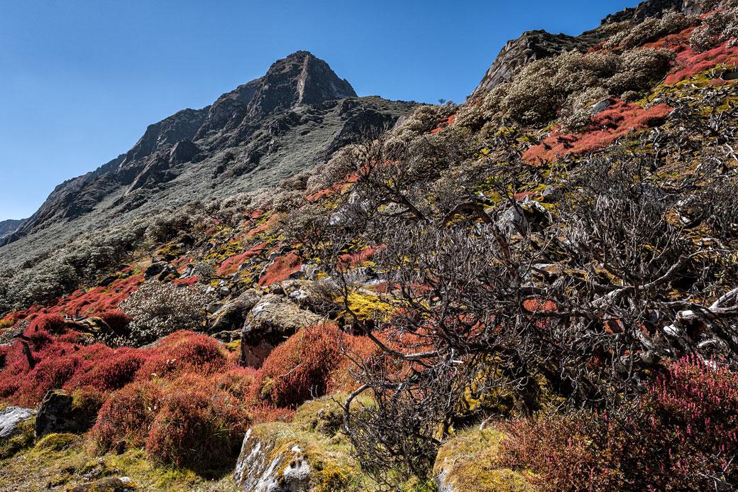 Montagnes et couleurs dans la vallée de Thampe Chhu, Bhoutan