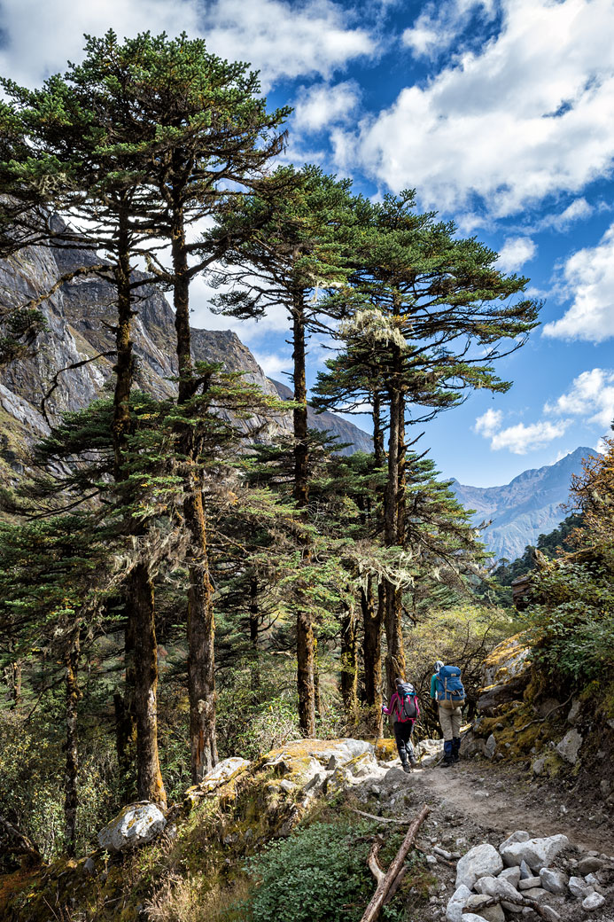 Arbres et ciel en route pour Tampoe Tsho, Bhoutan