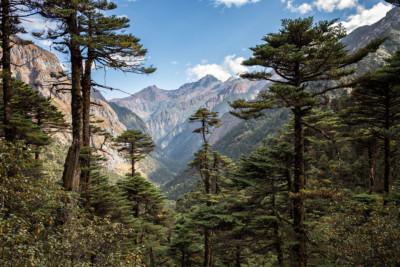 Forêt et montagnes en route pour Tampoe Tsho, Bhoutan
