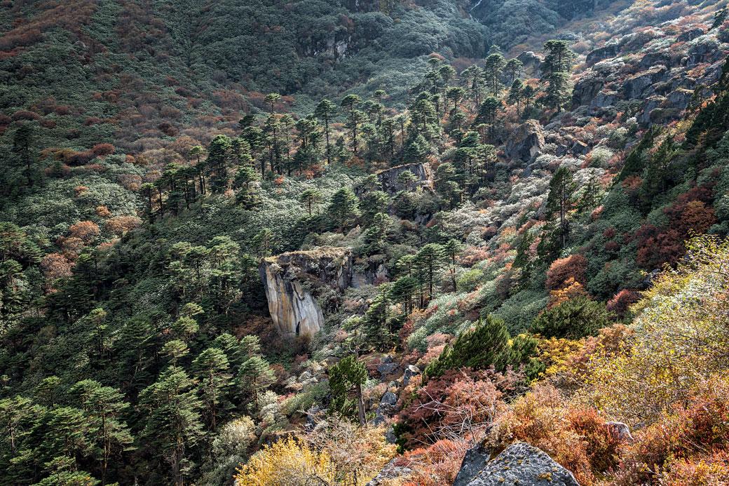 Arbres à flanc de montagne en route pour Tampoe Tsho, Bhoutan