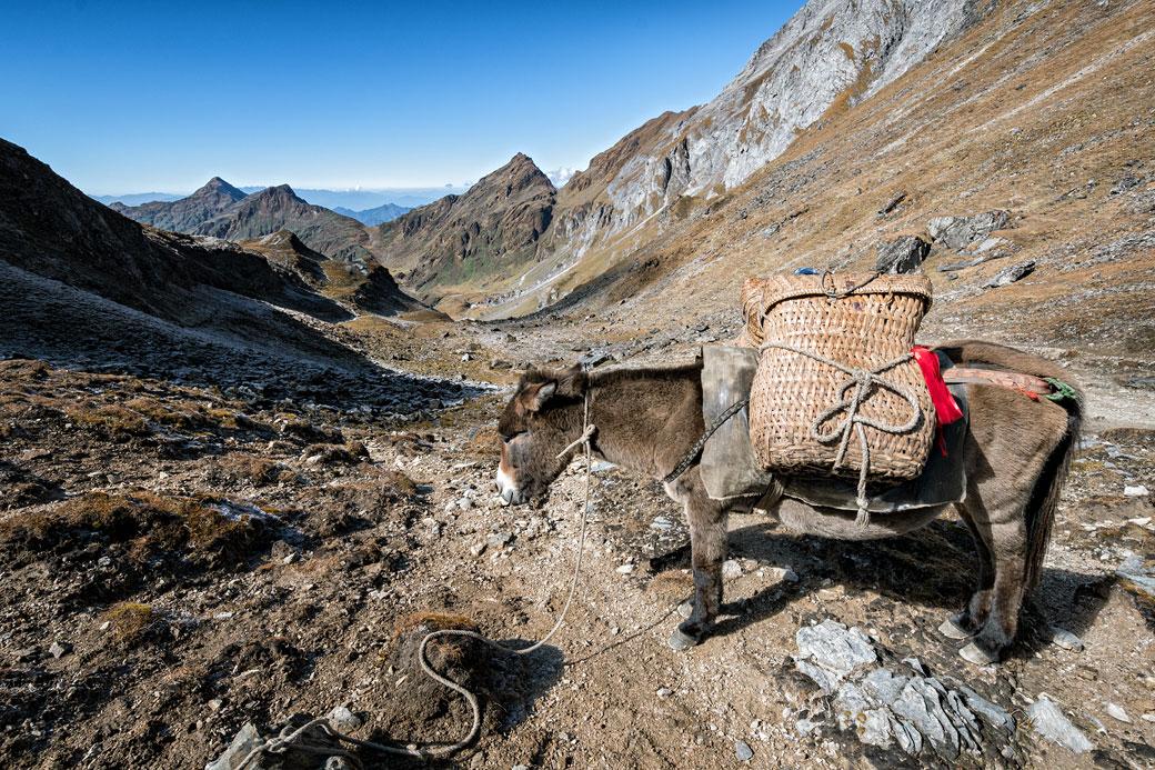 Mule chargée au col de Tempe La, Bhoutan