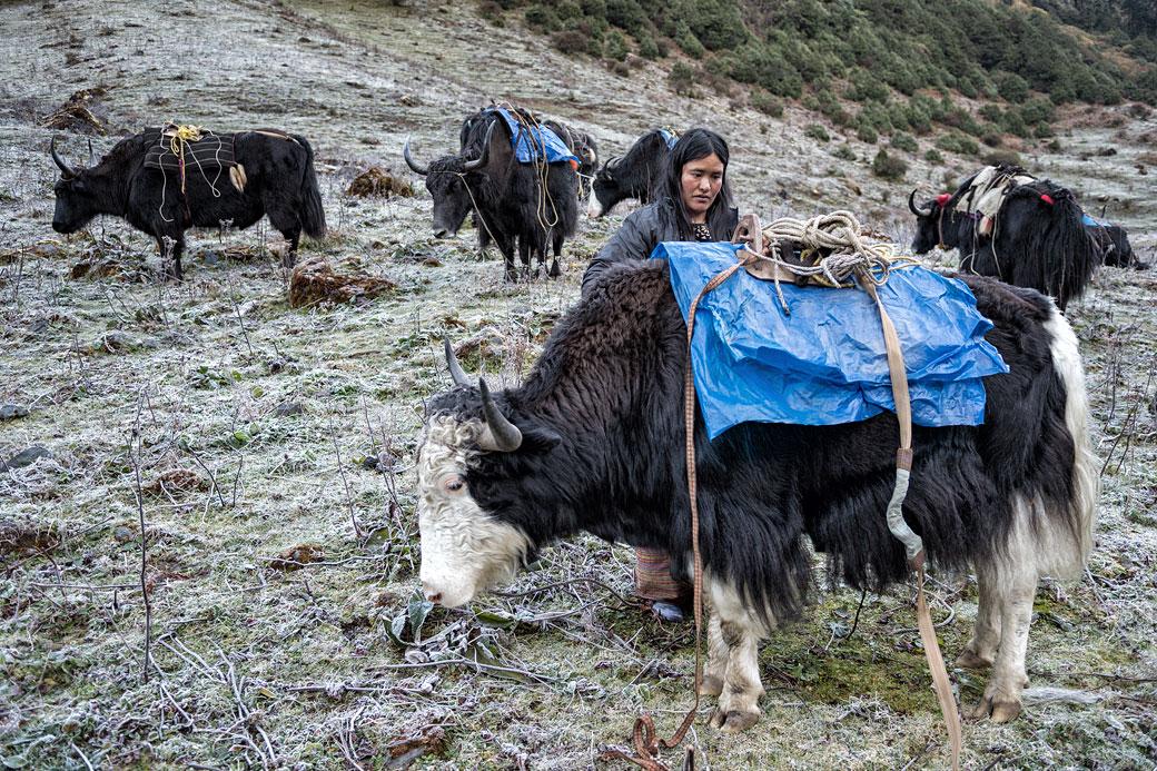 Gardienne de yaks au camp de Maurothang, Bhoutan