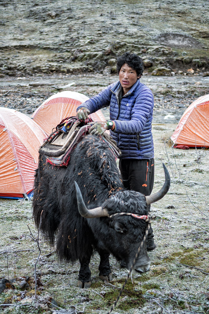 Gardien de yak au bivouac de Maurothang, Bhoutan