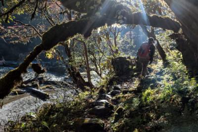 Trekkeur dans la forêt en route pour Nikka Chhu, Bhoutan