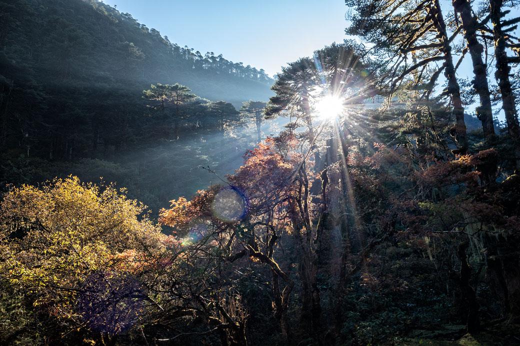 Soleil et forêt en route pour Nikka Chhu, Bhoutan