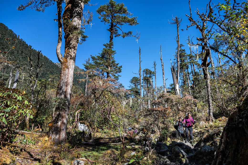 Trekkeurs et arbres morts en route pour Nikka Chhu, Bhoutan