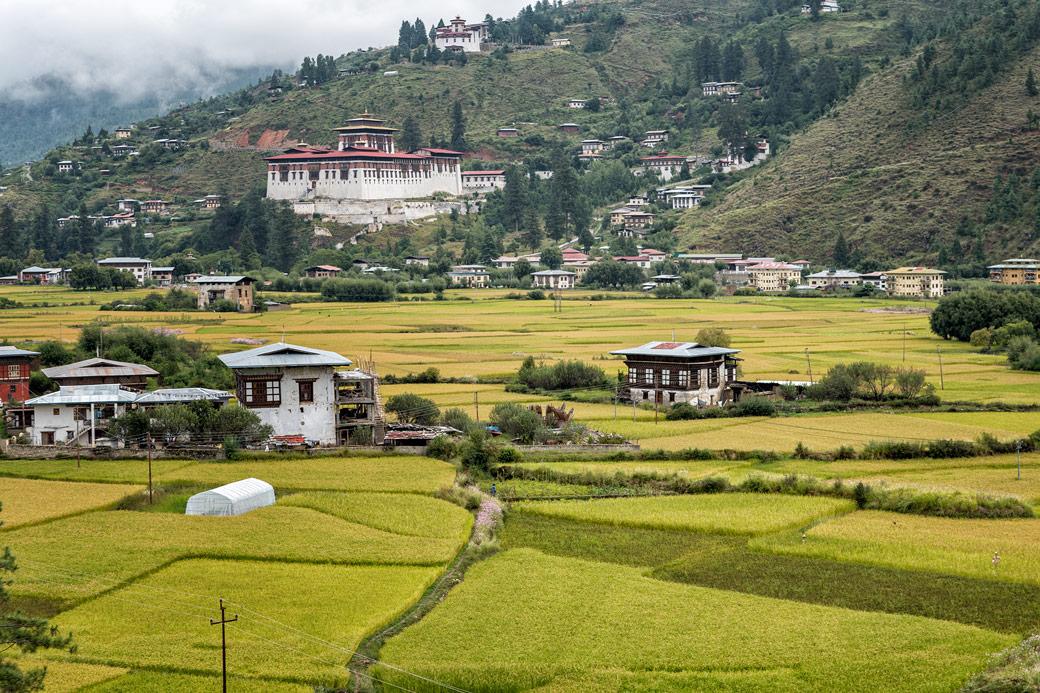 Rizières et dzong de Paro, Bhoutan