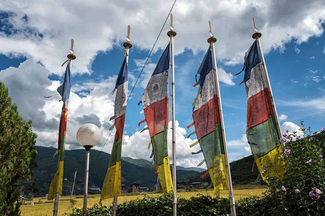 Drapeaux bouddhistes à Paro, Bhoutan