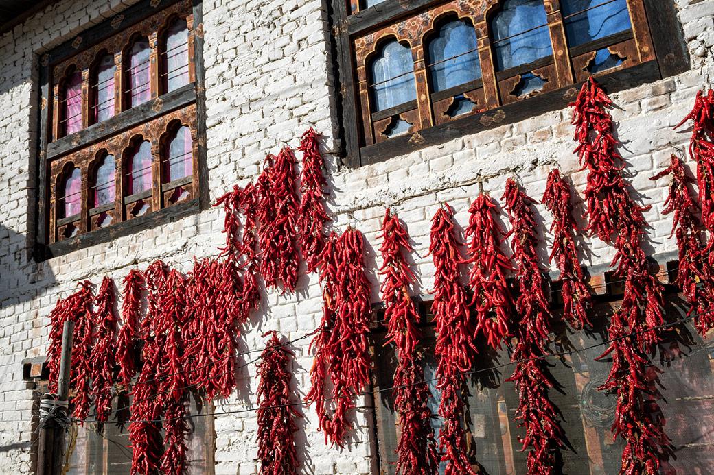 Piments rouges qui sèchent au soleil à Paro, Bhoutan