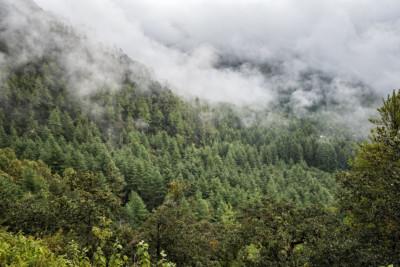Brume et forêt dans la vallée de Paro, Bhoutan