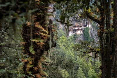 Monastère de Taktshang à travers la forêt, Bhoutan