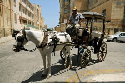 Charrette à cheval dans les rues de La Valette
