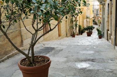 Plantes en pot dans une ruelle de Birgu, Malte