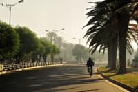 Avenue de Baher Dar et ses palmiers, Ethiopie