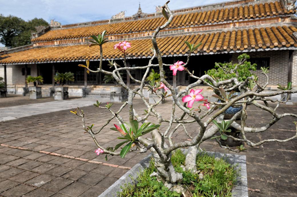 Frangipanier près d'un temple au tombeau de Tu Duc, Vietnam