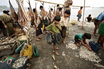 Enfants au marché aux poissons de Sittwe, Birmanie