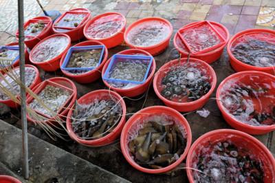 Bacs de fruits de mer dans un restaurant de Da Nang, Vietnam